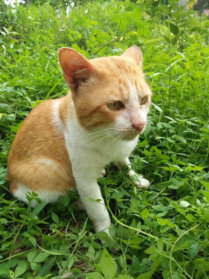 gatti immagini stock libere da diritti