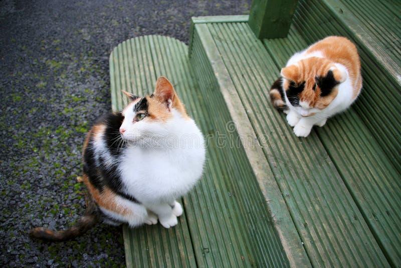 Download Gatti immagine stock. Immagine di verde, gatto, pets, seduta - 3885647