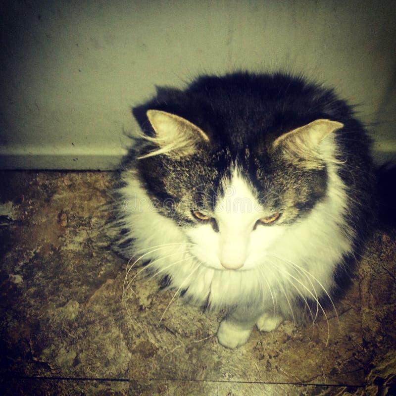 gatti immagine stock
