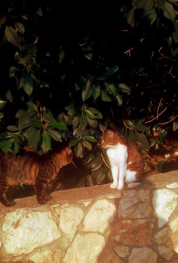 Gatti adorabili selvaggi royalty illustrazione gratis