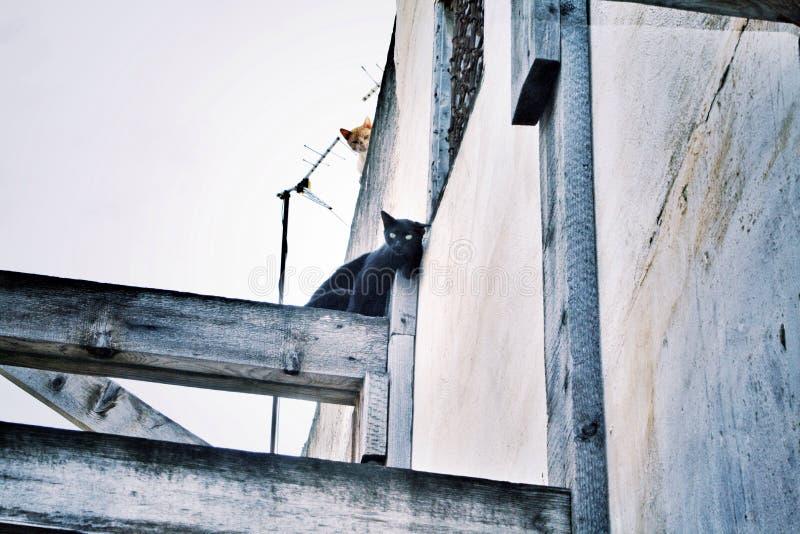 Gatti appostantesi nel Marocco immagini stock