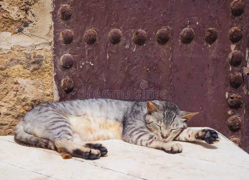 Gatti che mettono sulle vie nel Marocco fotografia stock libera da diritti