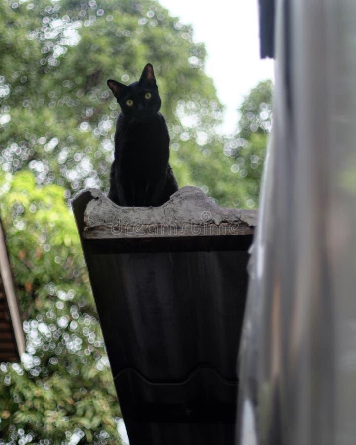 Gatti che si siedono sul tetto fotografia stock