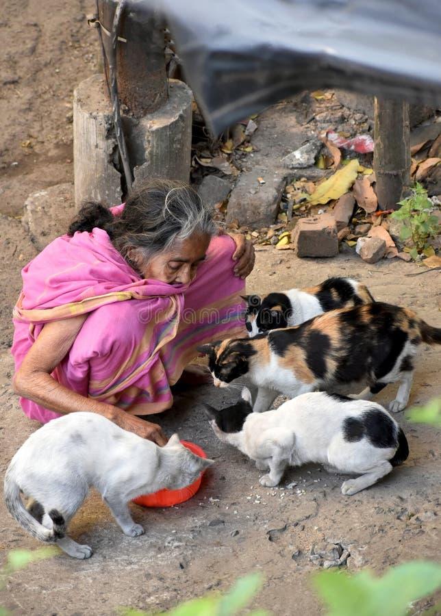 Gatti d'alimentazione della donna anziana fotografia stock