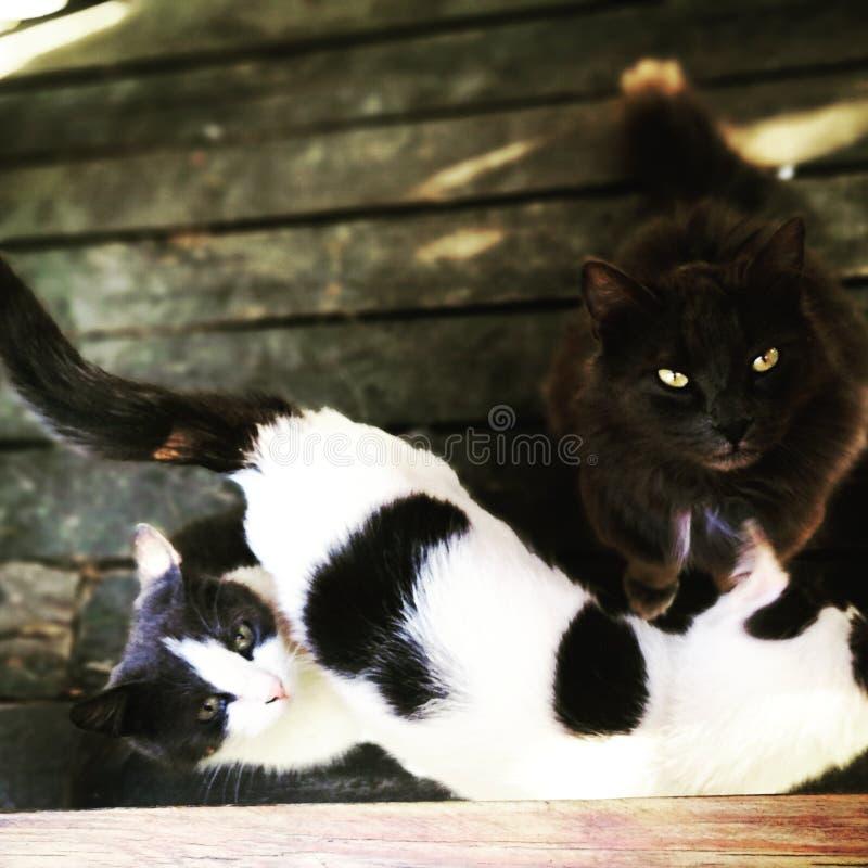 Gatti della foresta fotografie stock libere da diritti