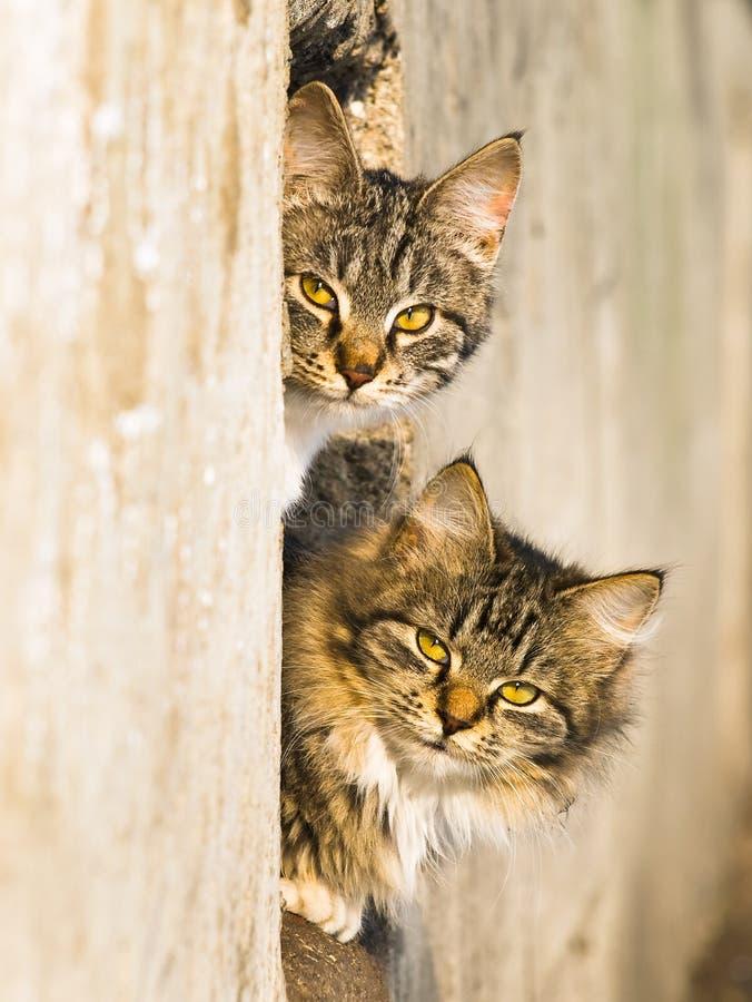 Gatti della sorgente fotografia stock
