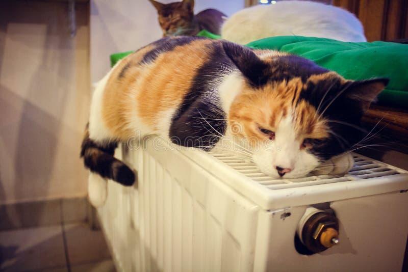 Gatti di colore immagini stock