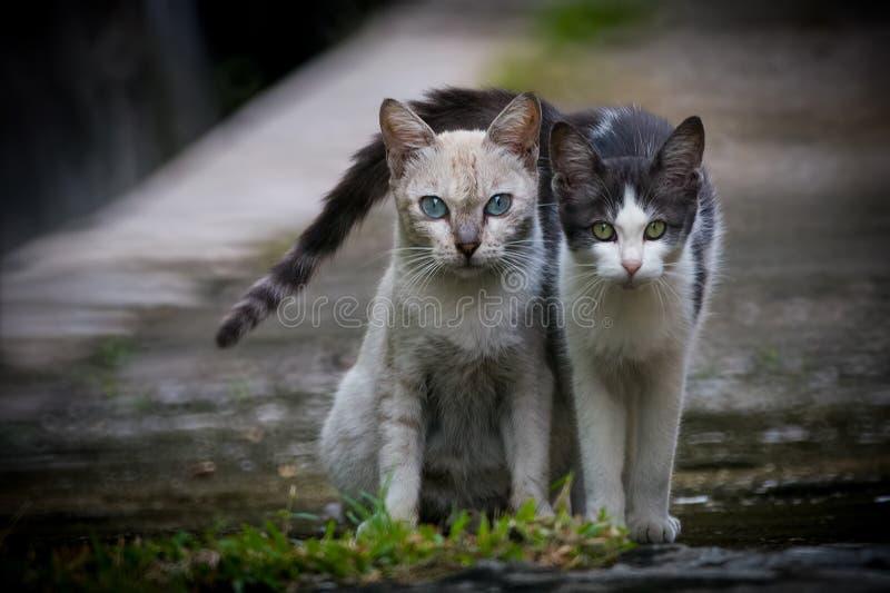 Gatti di vicolo posteriori 1 fotografia stock libera da diritti