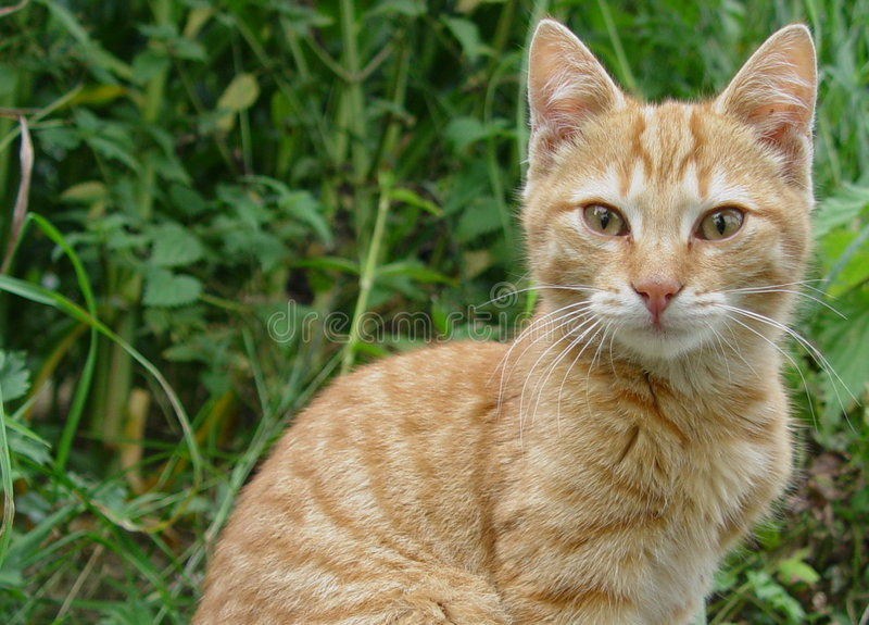 Gatti di Wonderfull fotografie stock