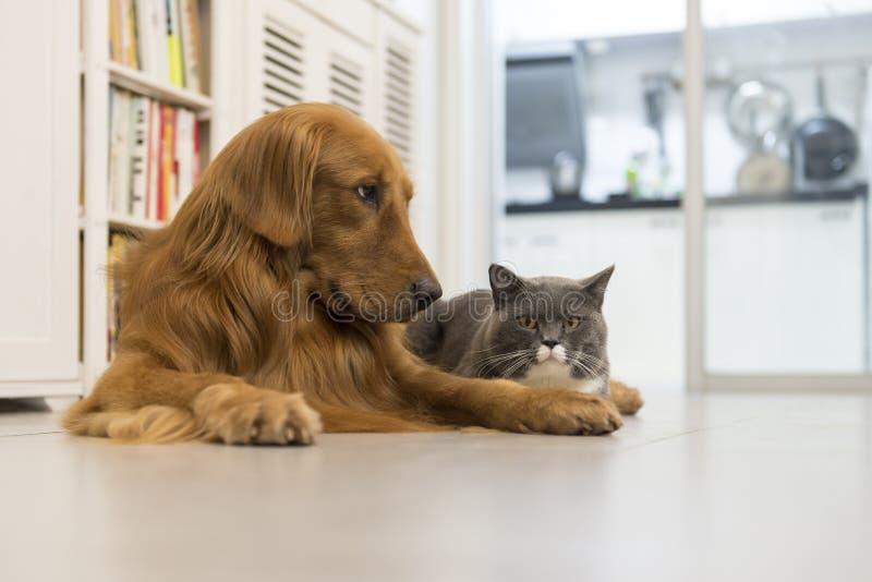 Gatti e cani fotografie stock