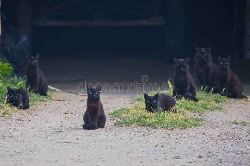 Gatti neri immagini stock