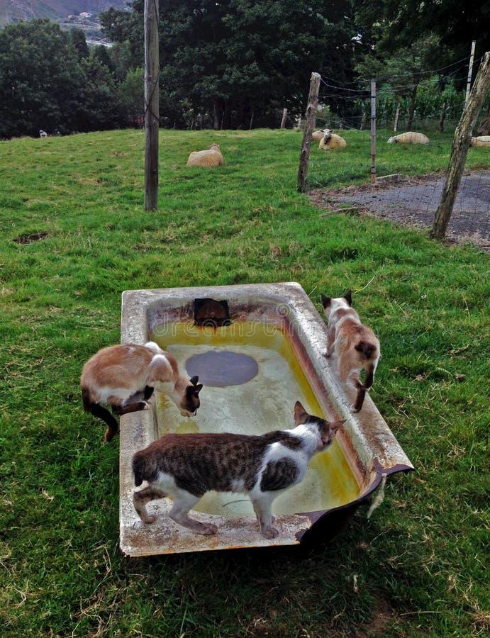 Gatti selvaggi fotografia stock