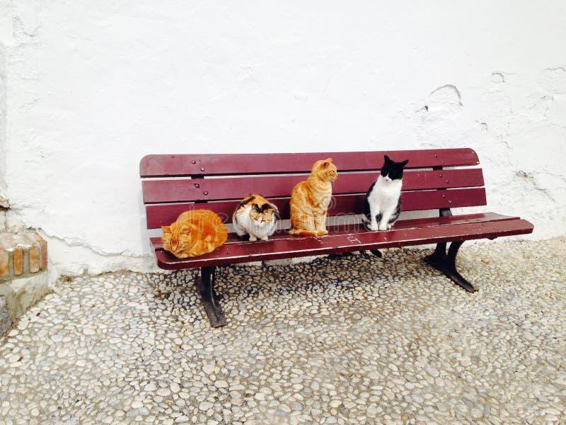 Gatti su un banco fotografia stock libera da diritti