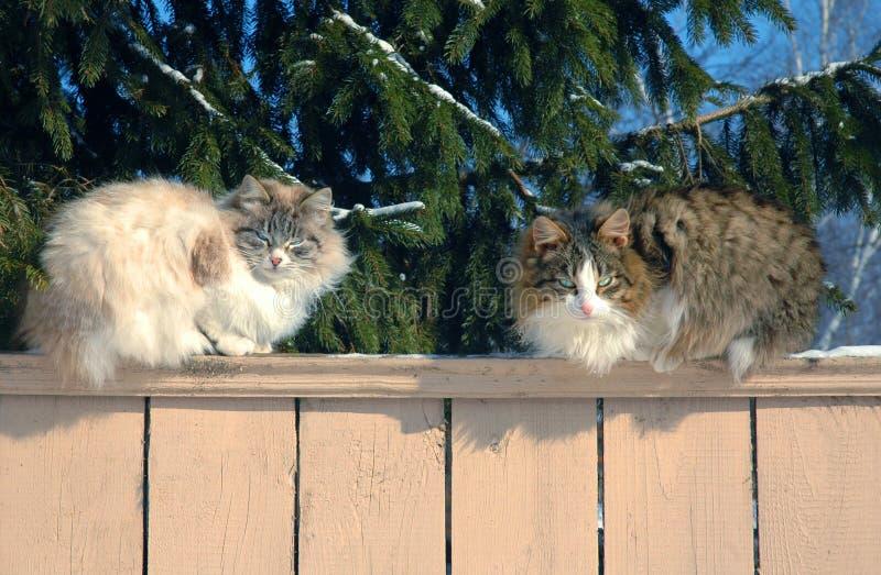 Gatti su un recinto di legno fotografie stock libere da diritti