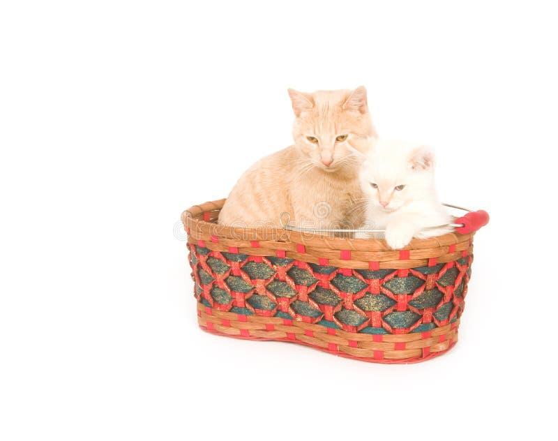 Download Gatti in un cestino immagine stock. Immagine di contenitore - 7315679