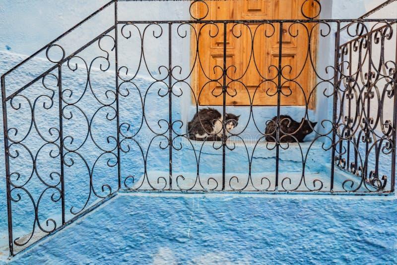 Gatti in una veranda blu a Chefchaouen, la città blu del Marocco immagine stock libera da diritti