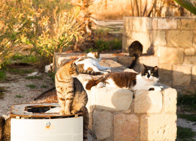 Gatti variopinti della via che si siedono vicino al carro armato dell'immondizia nel tramonto fotografia stock