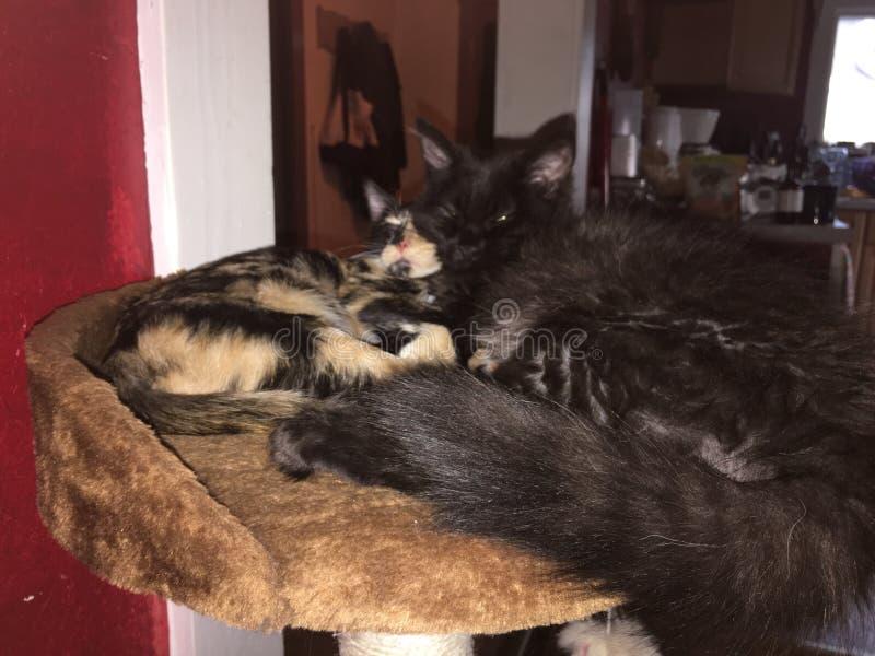 Gattini coccoli fotografie stock libere da diritti