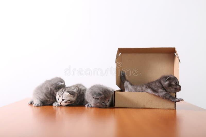 Gattini del bambino in una scatola di cartone immagini stock