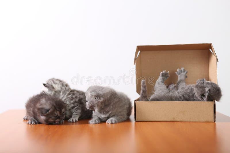 Gattini del bambino in una scatola di cartone fotografia stock