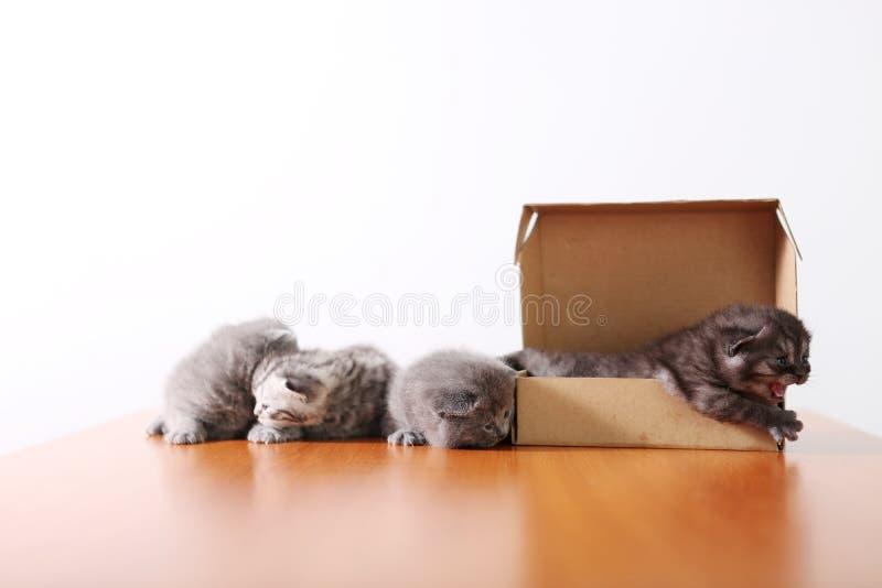 Gattini del bambino in una scatola di cartone immagine stock