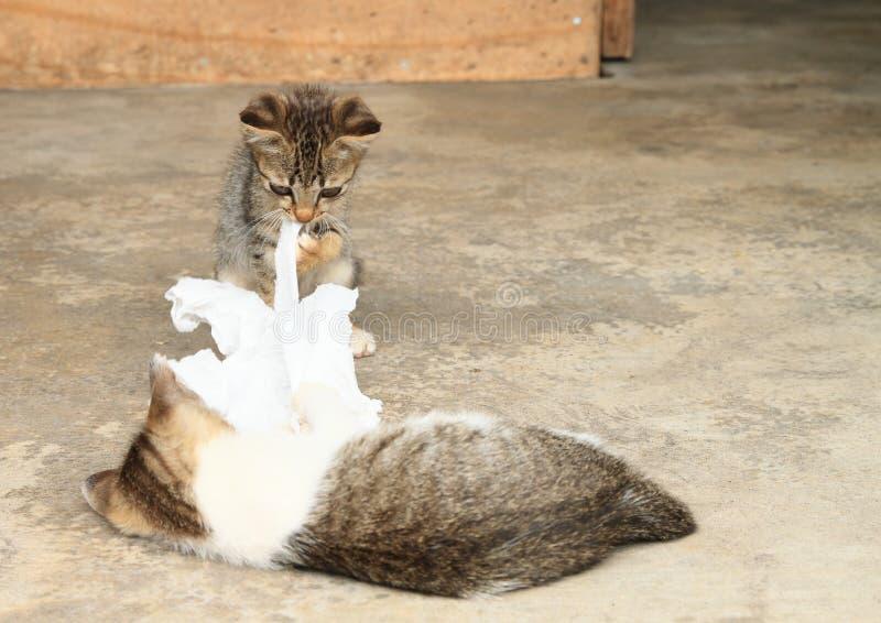 Gattini del soriano che giocano con la carta fotografie stock libere da diritti