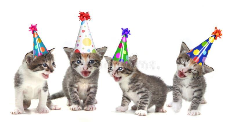 Gattini di canto di canzone di compleanno su priorità bassa bianca immagini stock