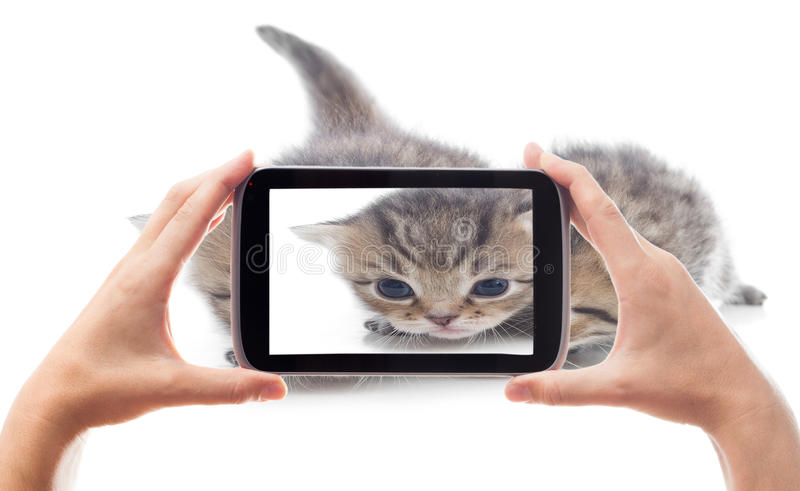 Gattini divertenti di fotografia immagine stock