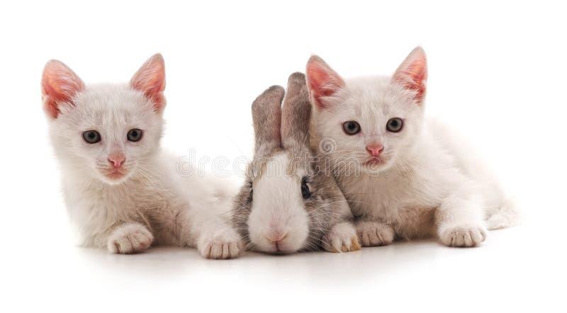 Gattini e coniglietto bianchi fotografie stock libere da diritti