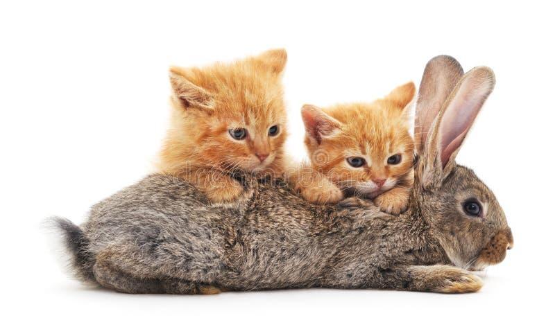 Gattini e coniglietto rossi fotografia stock libera da diritti