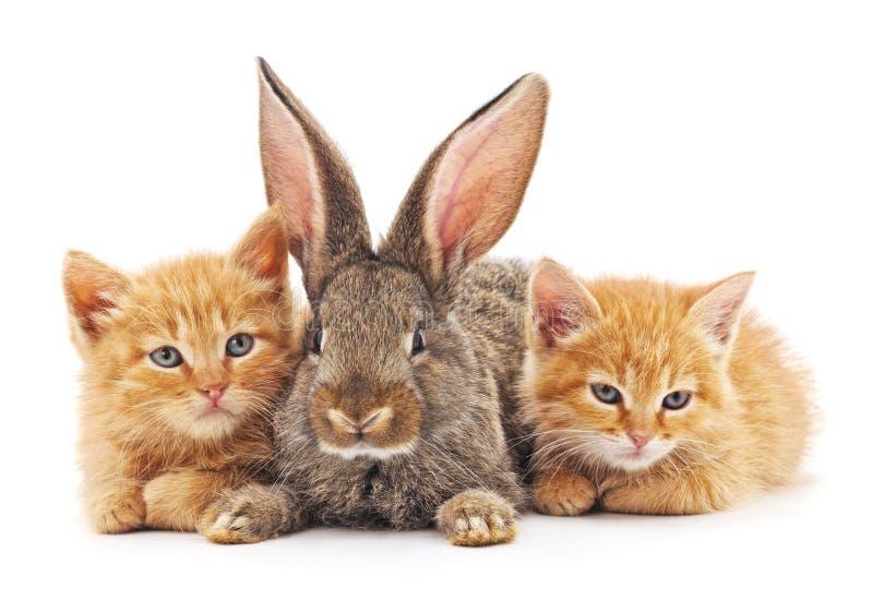 Gattini e coniglietto rossi fotografia stock