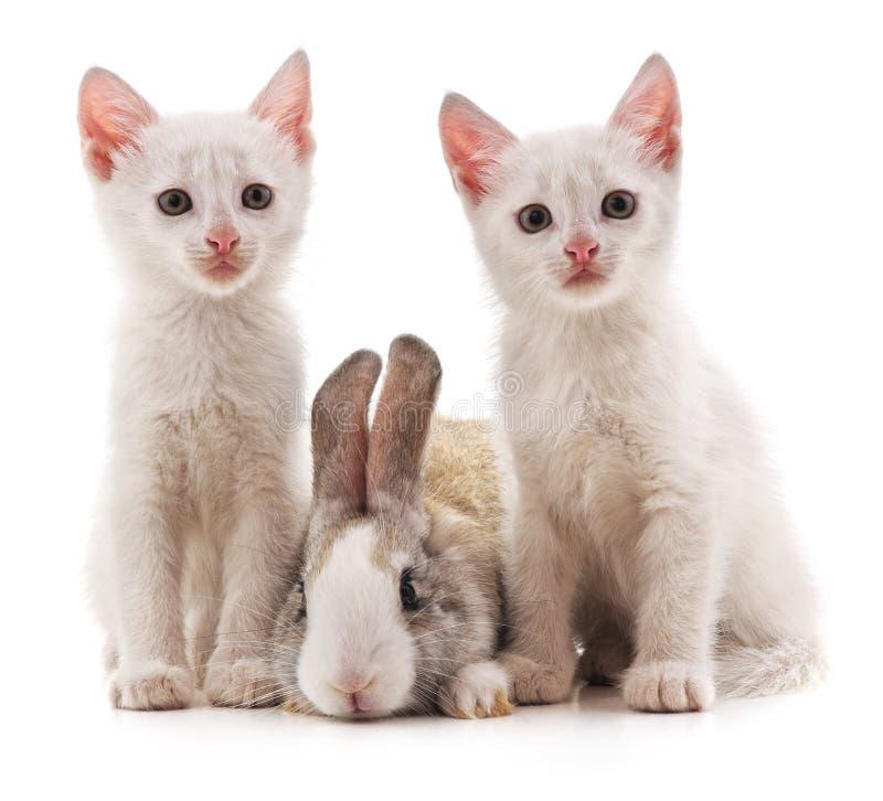 Gattini e coniglio fotografia stock libera da diritti