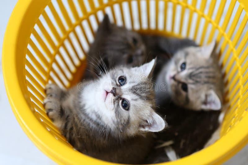 Gattini nel cestino fotografie stock libere da diritti