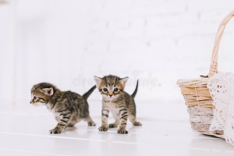 Gattini a strisce svegli piccoli fotografie stock