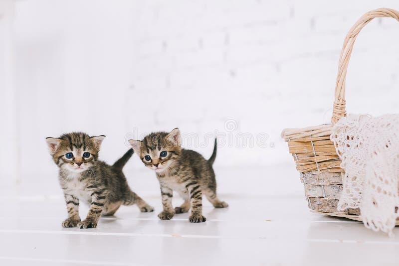 Gattini a strisce svegli piccoli fotografia stock libera da diritti