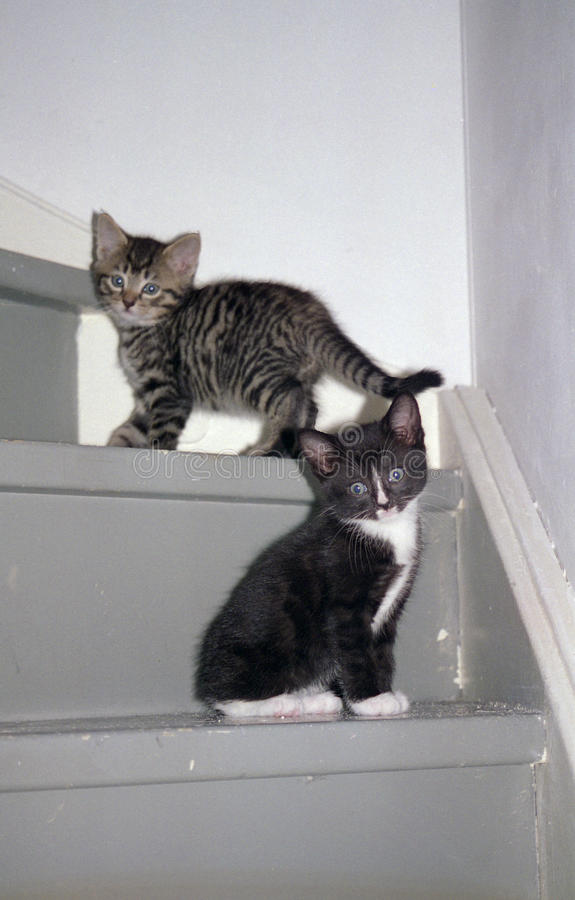 Gattini sulle scale. fotografie stock