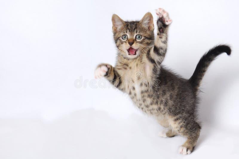 Gattini svegli che giocano sulla priorità bassa bianca fotografia stock