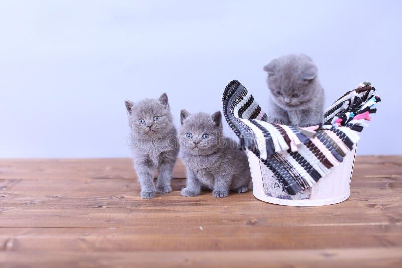 Gattini in un cestino fotografia stock