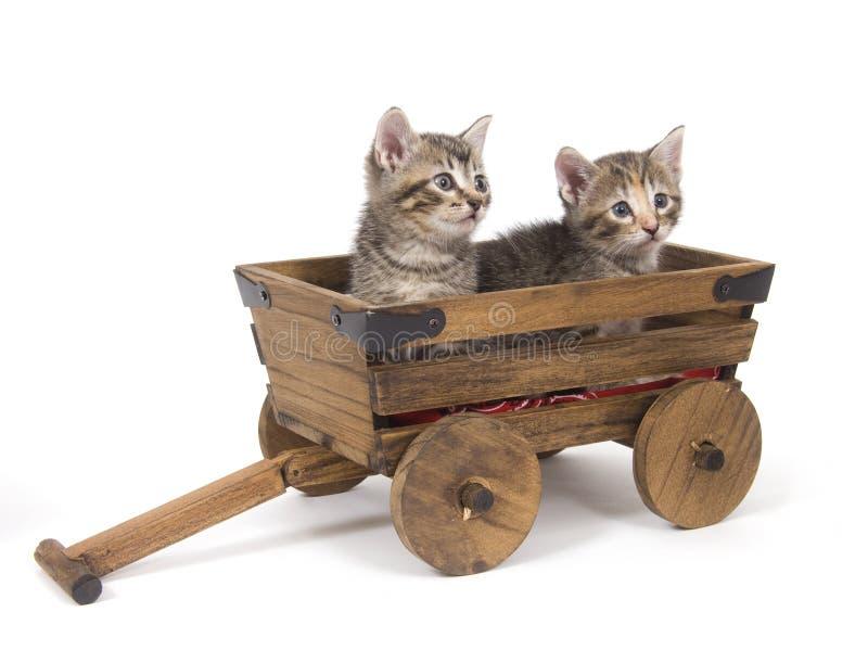 Gattini in un vagone fotografia stock libera da diritti