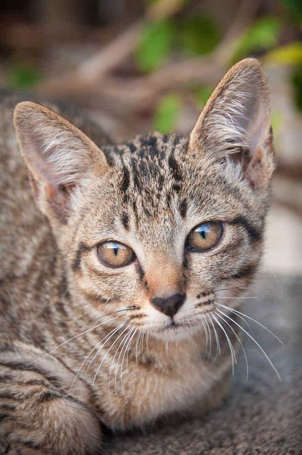 Gattino abbastanza selvaggio - asiatico fotografia stock libera da diritti