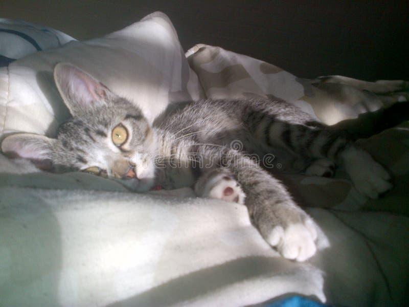 Gattino adorabile immagine stock