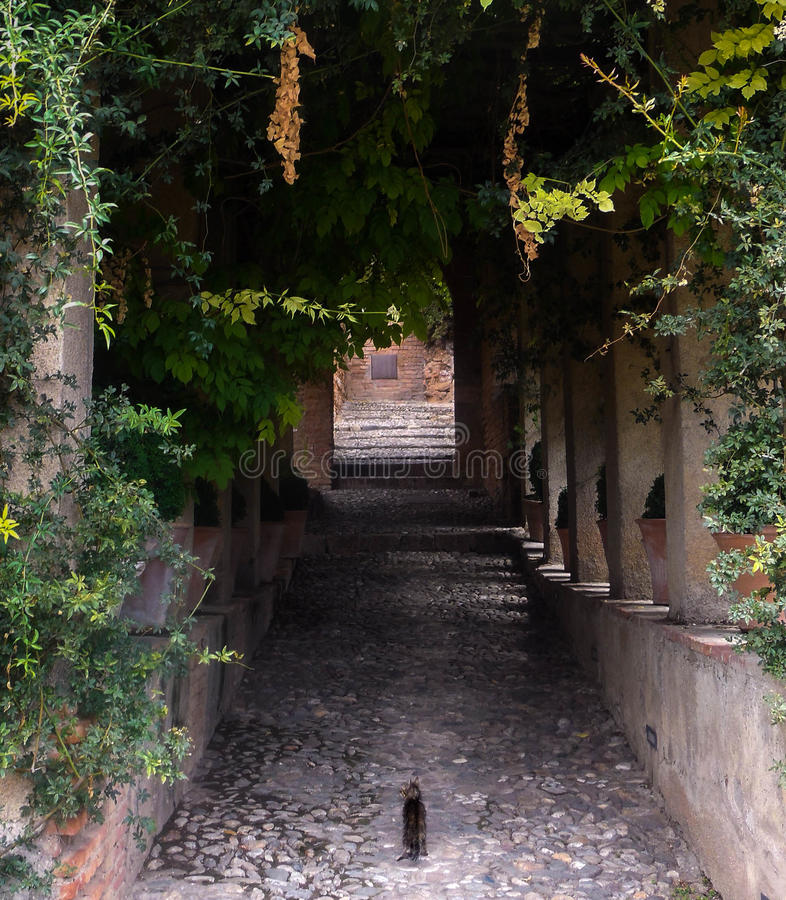 Gattino a Alhambra fotografie stock libere da diritti