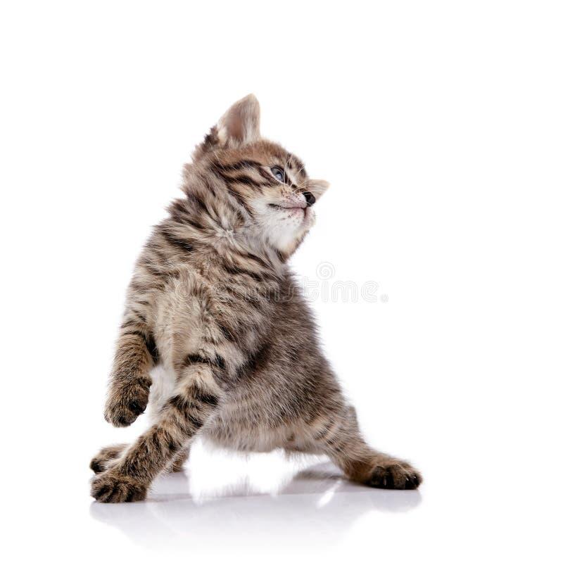 Download Gattino Allegro Adorabile A Strisce Fotografia Stock - Immagine di predatore, carnivoro: 55354336