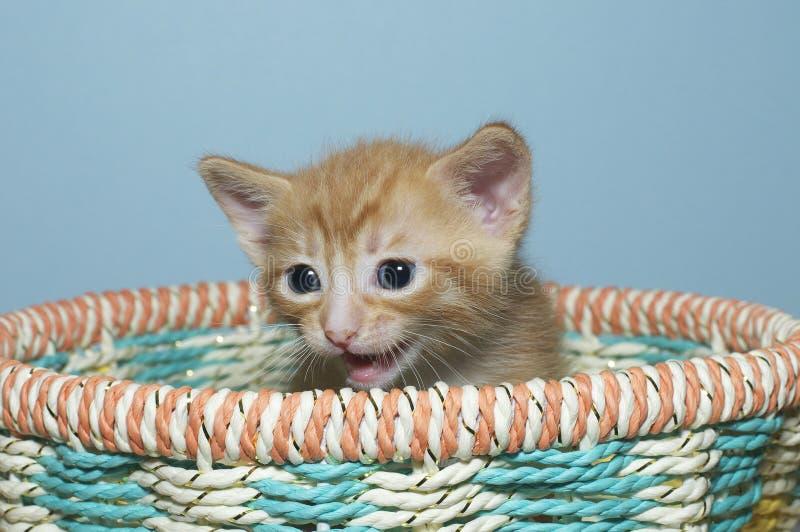 Gattino arancio del soriano una vecchia seduta di 4 settimane nel multi canestro colorato fotografie stock
