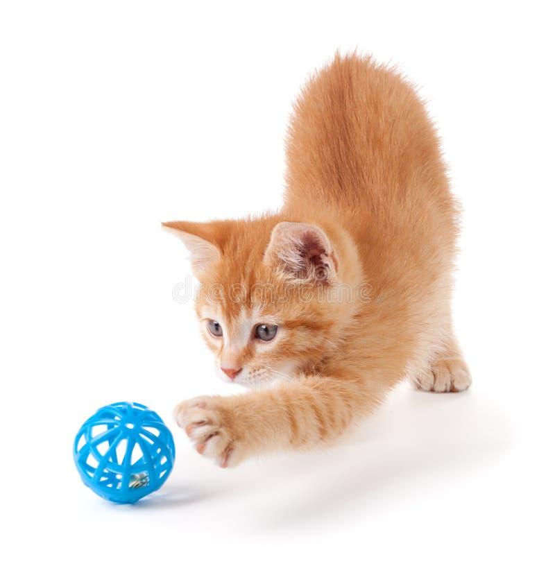 Gattino arancione sveglio che gioca con un giocattolo immagini stock libere da diritti