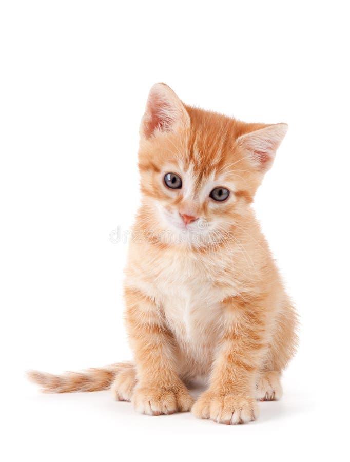 Gattino arancione sveglio con le grandi zampe. fotografie stock