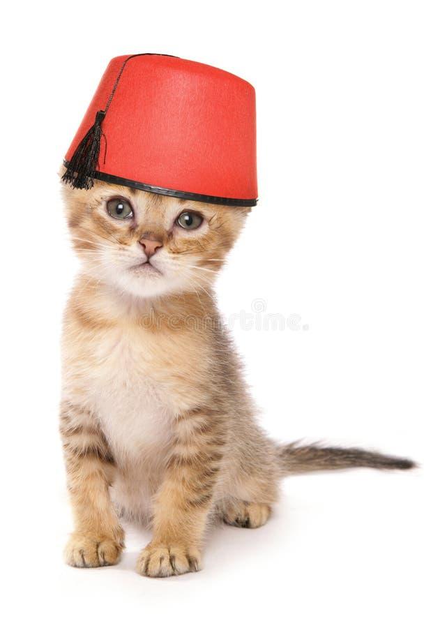 Gattino asiatico che porta un cappello di Fes fotografia stock libera da diritti