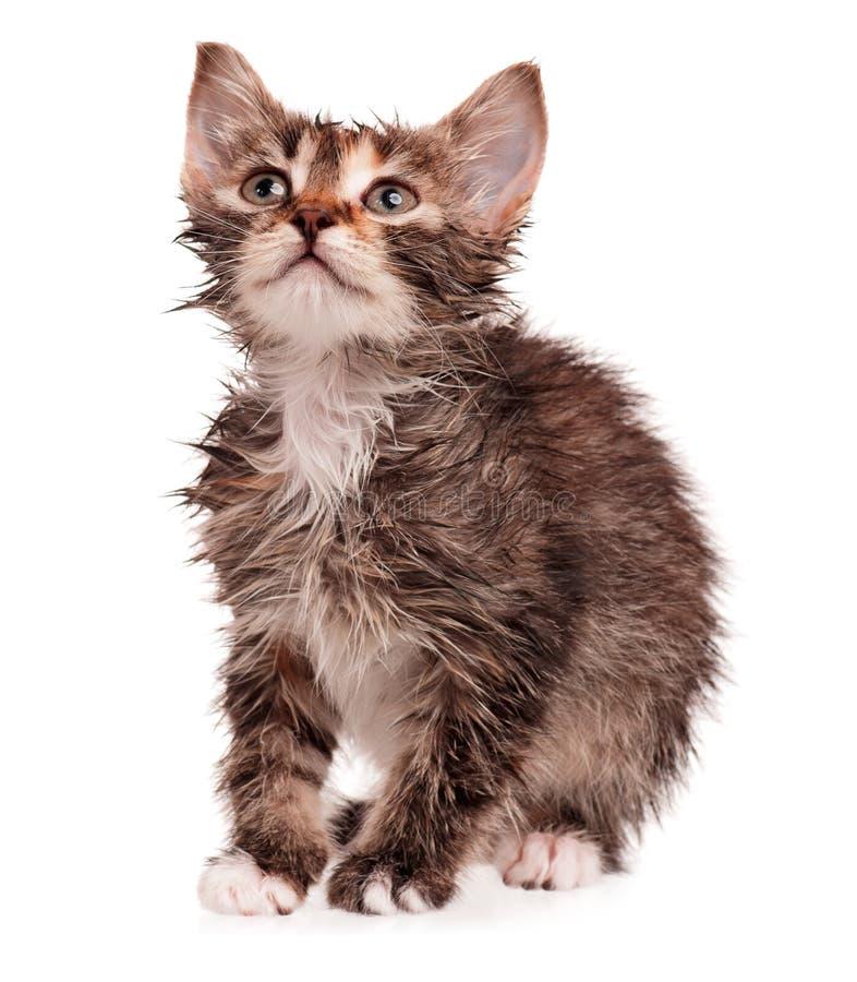 Gattino bagnato fotografie stock libere da diritti