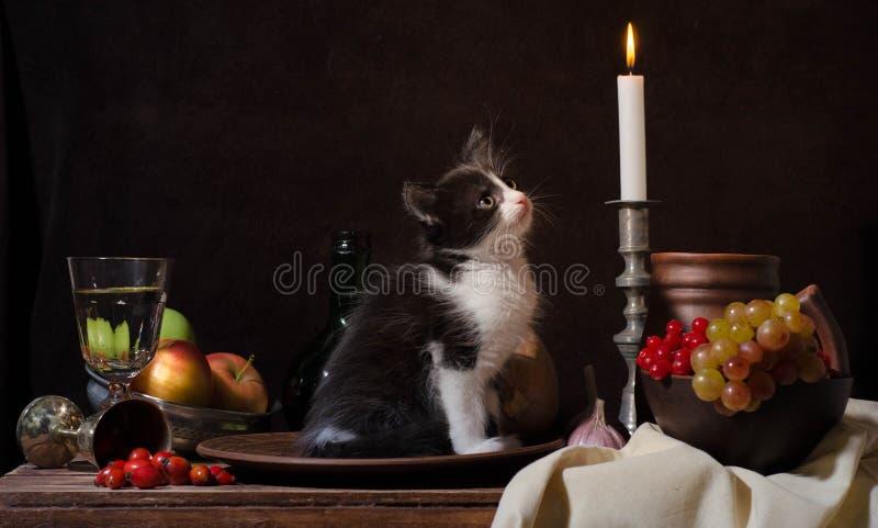 Gattino in bianco e nero che si siede in un piatto dell'argilla e che esamina a immagine stock libera da diritti