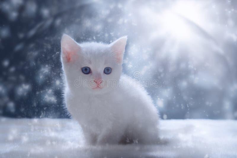 Gattino bianco nella scena della neve immagini stock libere da diritti